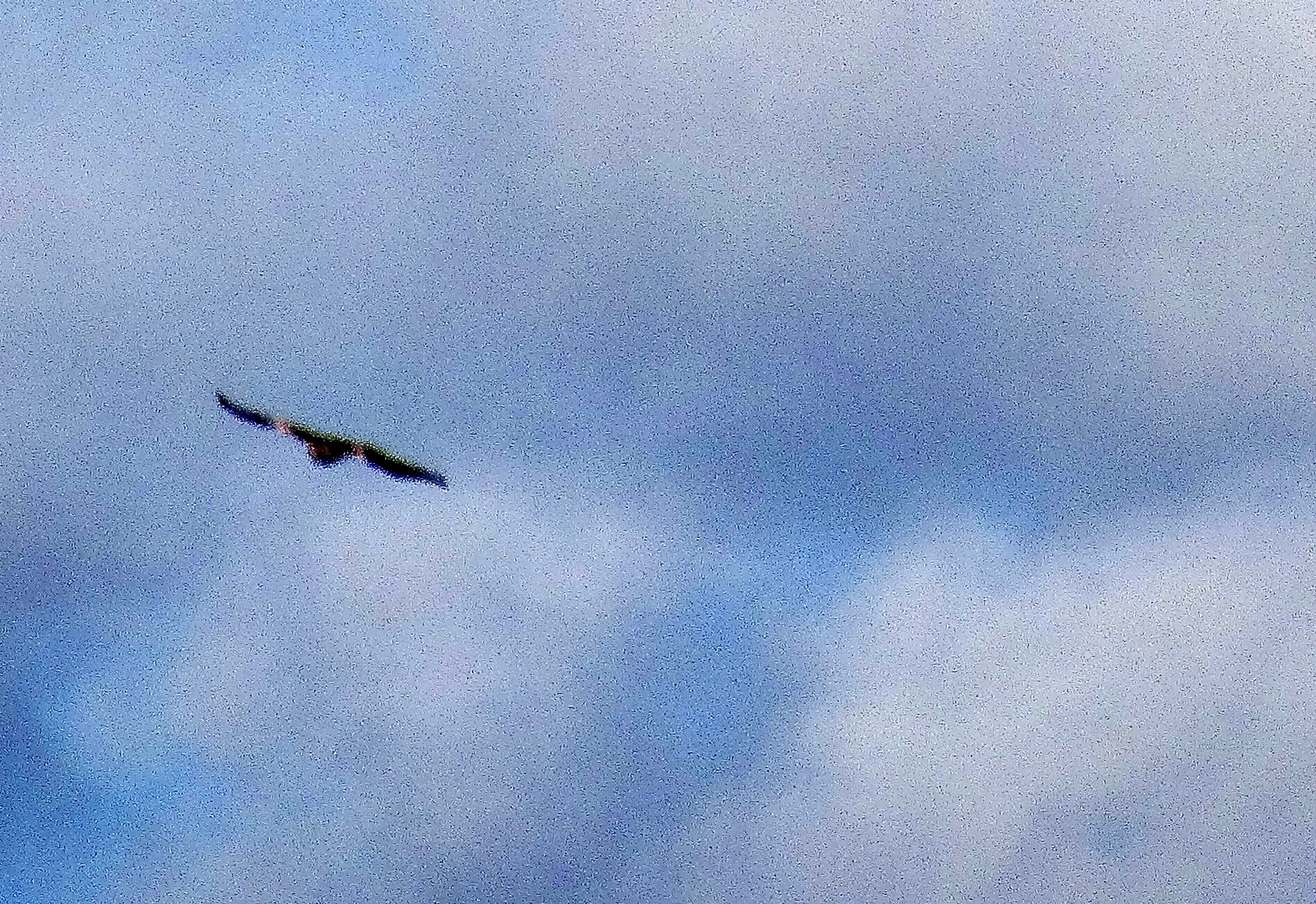 Red kite against blue sky and clouds